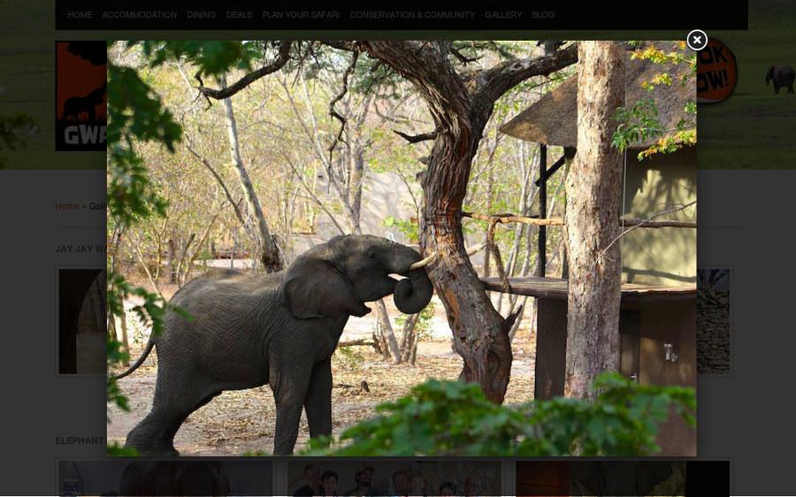 Gwango Elephant Lodge Gallery